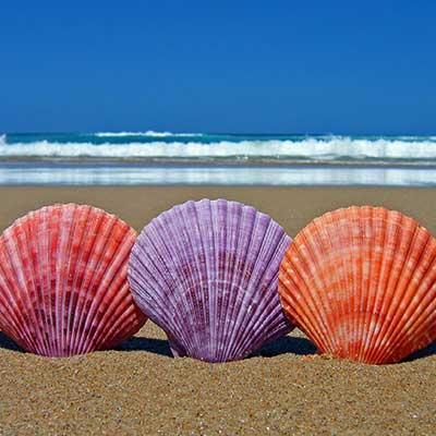 bigstock-Five-Scallop-Sea-Shells-1350445